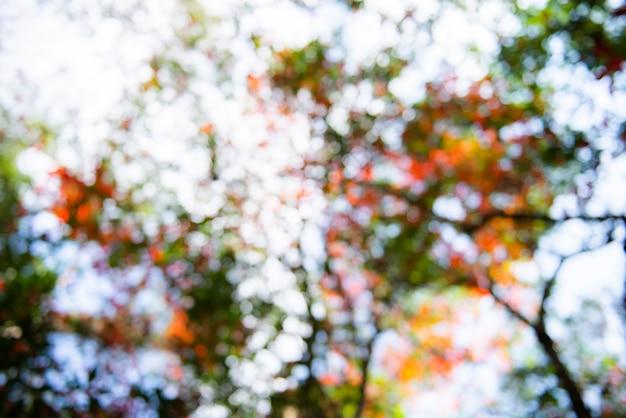 Bild des abstrakten bokeh, das licht, das durch die bäume in der regenzeit scheint.