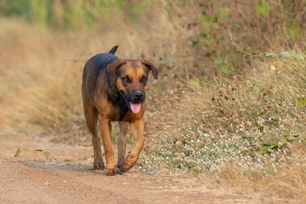 Bild des braunen hundes auf natur.