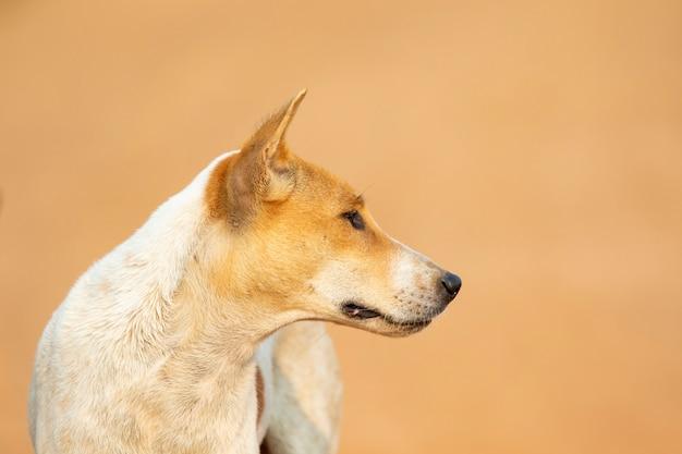 Bild des braunen und weißen gestreiften hundes auf natur.