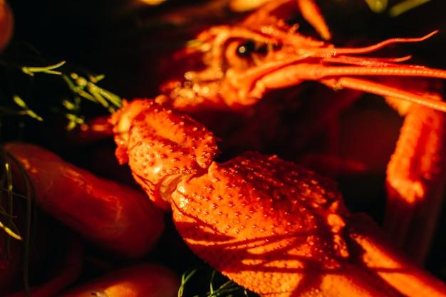 Bild des großen gedämpften krebses der rot-orange farbe im sonnenlicht