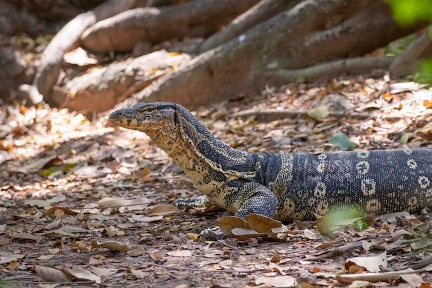 Bild des wassermonitors auf einem natürlichen hintergrund. tiere. reptilien