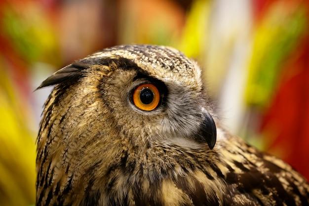 Bild einer eule auf natur. vögel. wilde tiere.