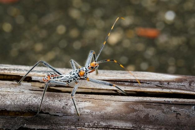 Bild eines assassinenwanzen auf trockenem holz. insekt. tier