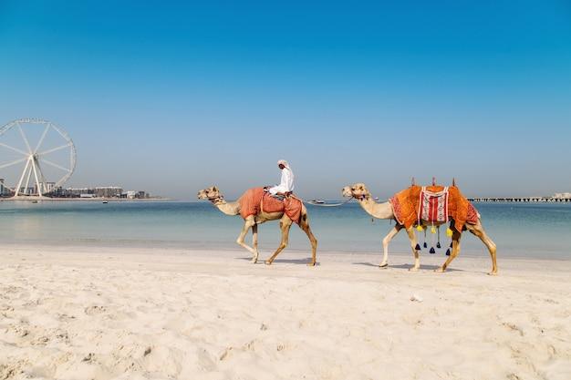 Bild mit kamelen.