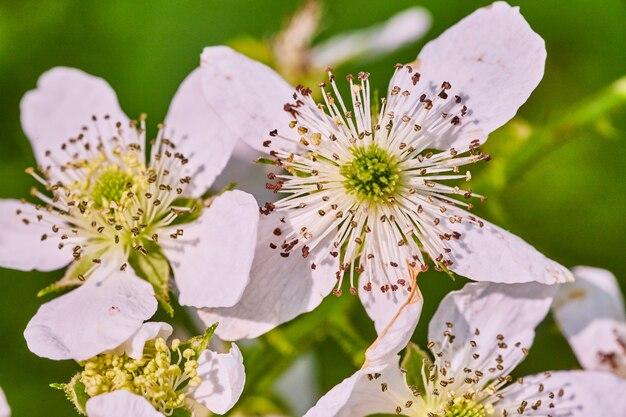 Bild von blühenden weißen blumen im frühling aus nächster nähe