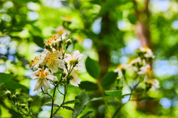 Bild von blühenden weißen frühlingsblumen im wald