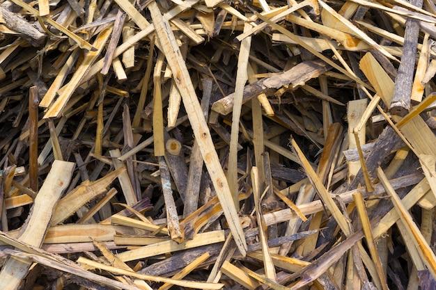 Bild von chips und anderen trümmern von einem gebrochenen baumstamm. kleine schärfentiefe zerhackte feuerhölzer.