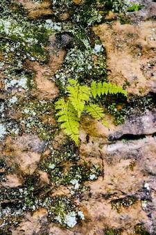 Bild von farn und flechten, die auf steinfelsen-texturdetail wachsen
