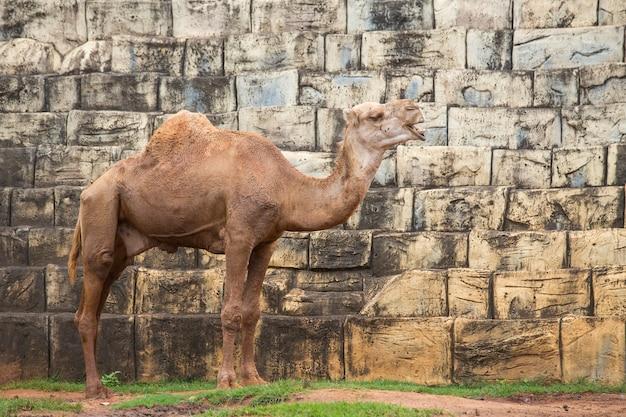 Bild von kamel