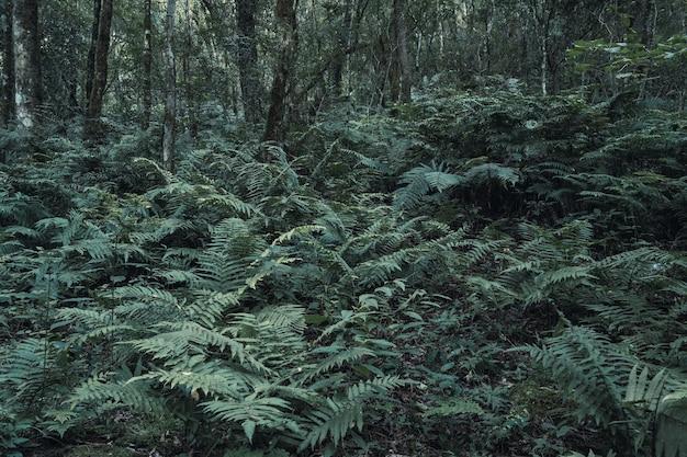 Bild von wilden farnpflanzen im dschungel.