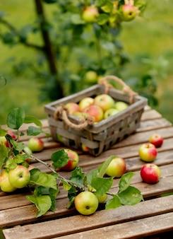 Bio-äpfel in einer box und auf einem tisch in der nähe von apfelbaum in einem garten