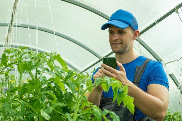 Bio-bauer mit smartphone im gewächshaus mit bio-tomatenanbau