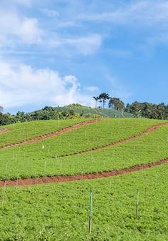 Bio-gemüsebeet mit dem bewässerungssystem.