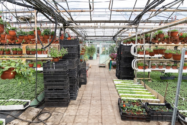 Bio-gewächshaus mit saisonalen blumensämlingen und topfpflanzen für die gartenarbeit in töpfen wachsen