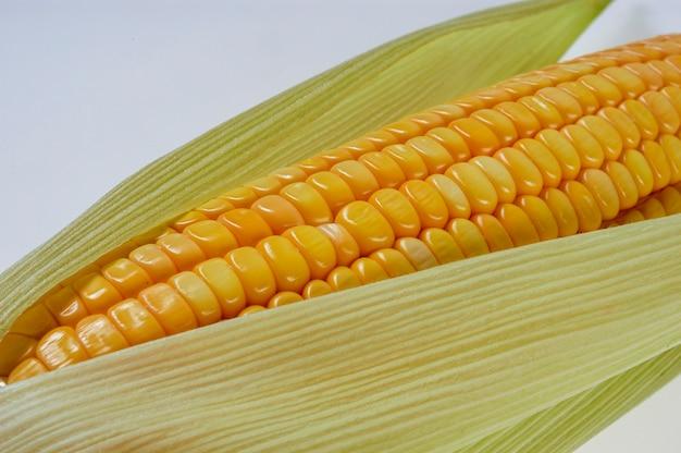 Bio maiskolben isoliert auf weißem hintergrund.