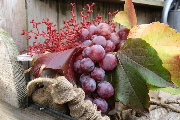 Bio-obst im korb im herbst frische trauben, in der natur