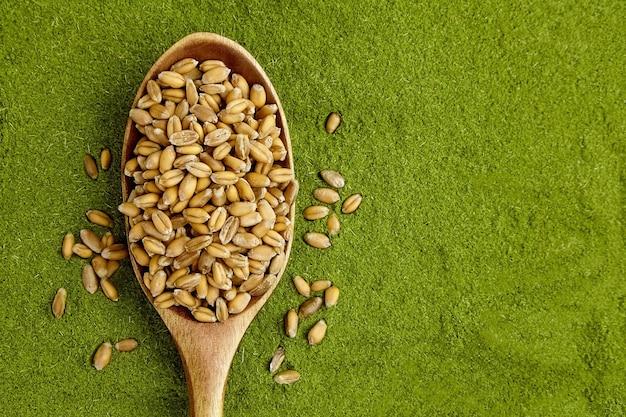 Bio-weizengrassamen zum keimen in holzlöffel auf weizengraspulverhintergrund. draufsicht