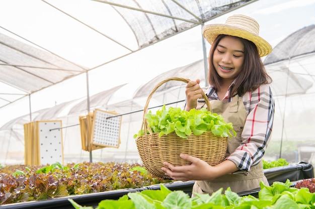 Biobauer der jungen asiatischen hydrokultur, der gemüsesalat in korb sammelt