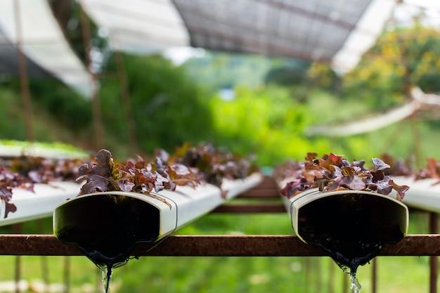Biohof mit landwirtschaftlichem gemüsewasserkultur