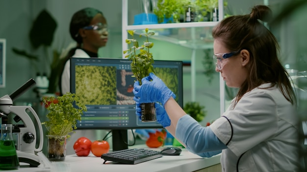 Biologe, wissenschaftlicher arzt, der grüne schösslinge untersucht, während er auf tastaturökologie-expertise tippt. forscherin beobachtet genetische mutationen an pflanzen und arbeitet im landwirtschaftslabor