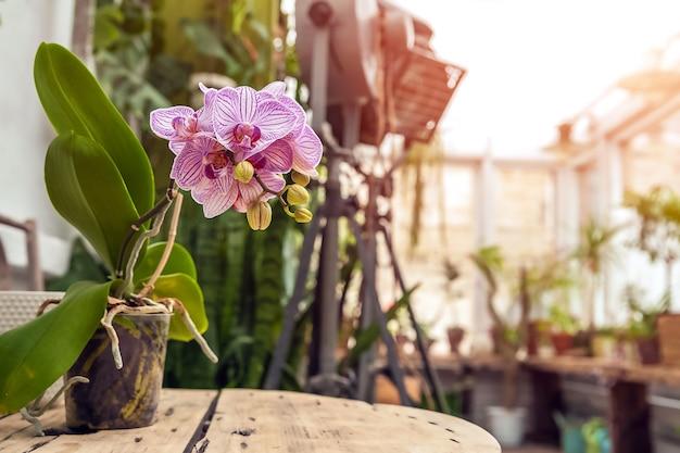 Biophilie-trendstil. details eines hofes mit topfpflanzen. orchideen blühen.