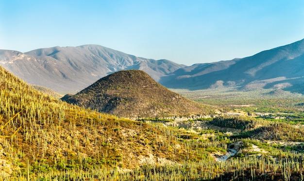 Biosphärenreservat tehuacan-cuicatlan. unesco-weltkulturerbe in mexiko