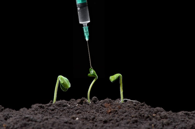Biotechnologie, fügen sie den pflanzen eine flüssigkeit mit einer spritze, dunkler hintergrund