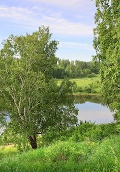 Birken am seeufer sommerlandschaft unter blauem himmel grünes üppiges laub