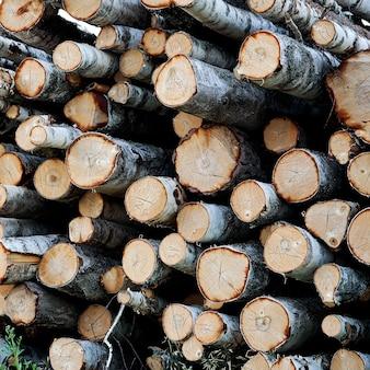 Birkenbaumschnitt protokolliert hintergrund. stapel von protokollen. stapel brennholz nahaufnahme. gesägte baumstämme mit unterschiedlichen durchmessern