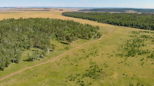 Birkenhain und wälder umgeben die luftaufnahme der grünen wiese. panorama der landschaft von der drohne.
