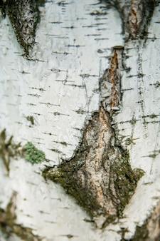 Birkenrinde textur nahaufnahme vertikal für hintergrund