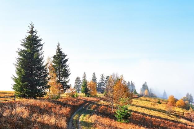 Birkenwald im sonnigen nachmittag während der herbstsaison.