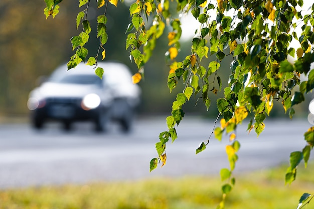 Birkenzweig mit gelbem und grünem herbstlaub auf einer defokussierten autobahn und autos in der oberfläche
