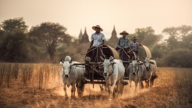 Birmanischer ländlicher mann, der hölzernen wagen mit heu auf der staubigen straße gezeichnet durch zwei weiße büffel fährt.