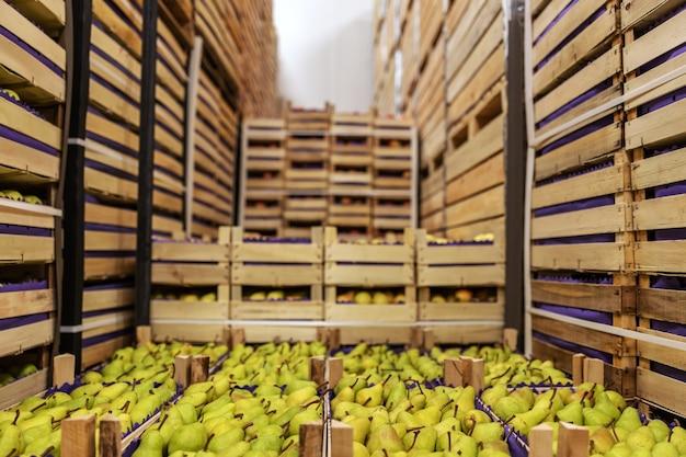 Birnen und äpfel in kisten versandbereit. kühlraum innen.