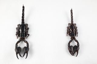 Black scorpion paar isoliert insekten