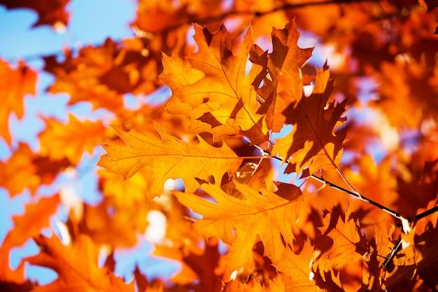 Blätter an den zweigen im herbstwald.