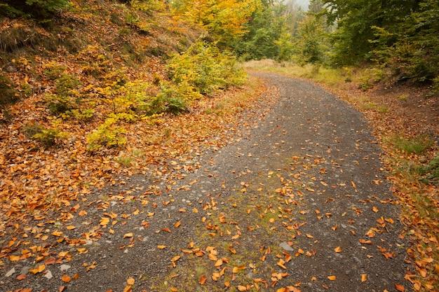 Blätter auf asphalt kurvten landstraße entlang bäumen