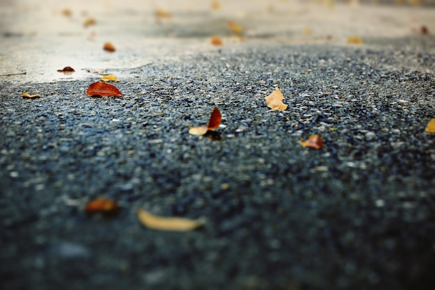 Blätter auf dem boden nach starkem regen fallen.