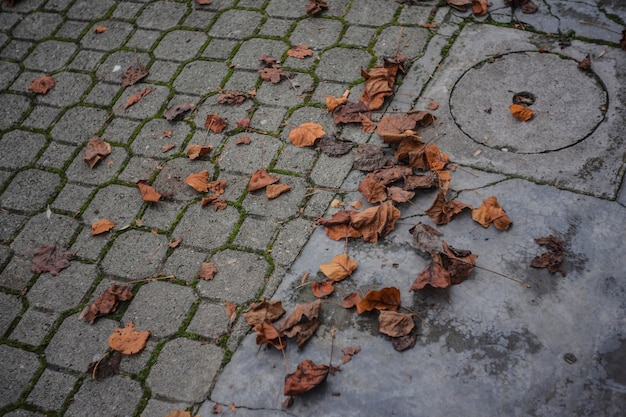 Blätter auf dem bürgersteig im herbst