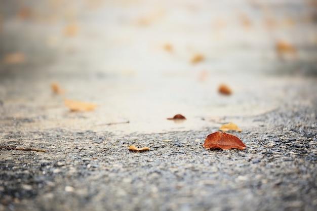 Blätter auf nassem boden nach starkem regen.