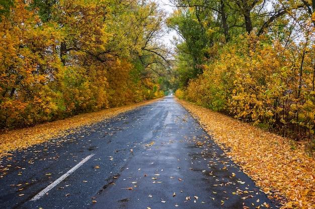 Blätter auf regnerischer straße