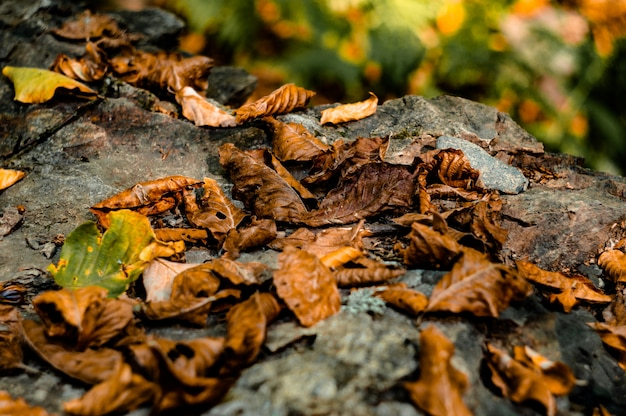 Blätter auf stein