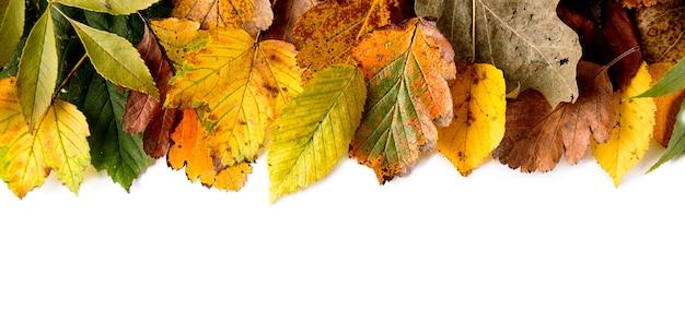 Blätter auf weißem hintergrund