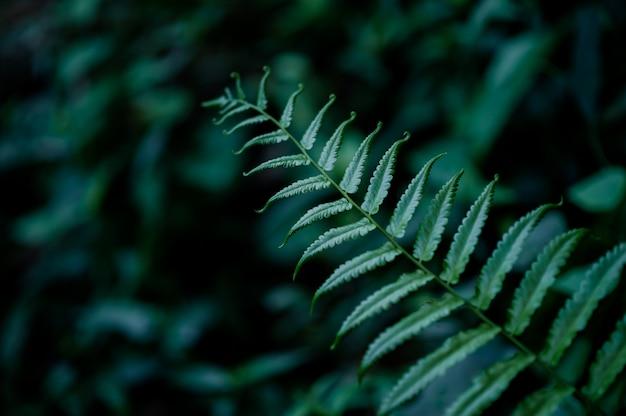 Blätter aus der natur, die in der regenzeit reichlich vorhanden sind, natürliche konzepte