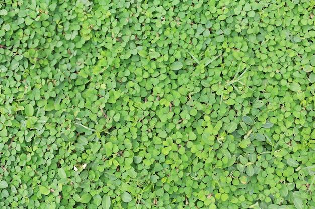 Blätter des grünen grases für hintergrund.