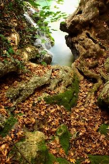 Blätter, die den boden und kleinen wasserfall