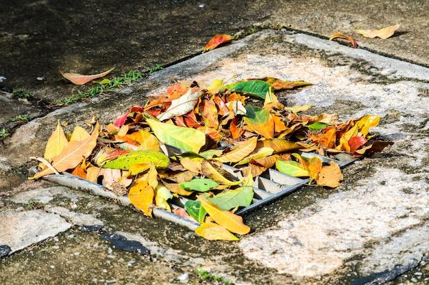 Blätter fallen nach starkem regen abflussgebiet verursacht überflutung