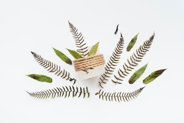 Blätter gebunden mit der schnur lokalisiert auf weißem hintergrund