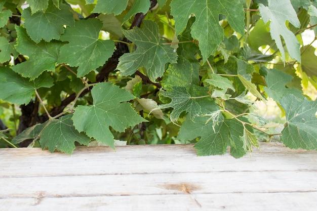 Blätter hängen an einem baum